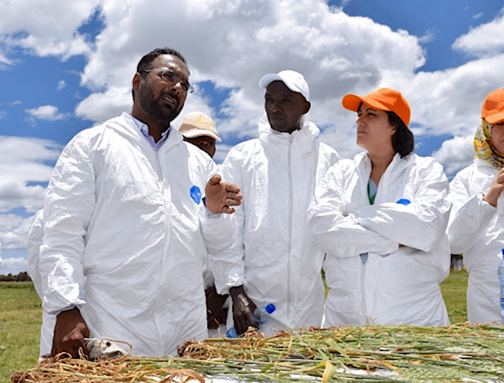 Mandeep Randhawa (left) talks to the participants of the 11th annual training on stem rust notetaking and germplasm evaluation. (Photo: Jerome Bossuet/CIMMYT)