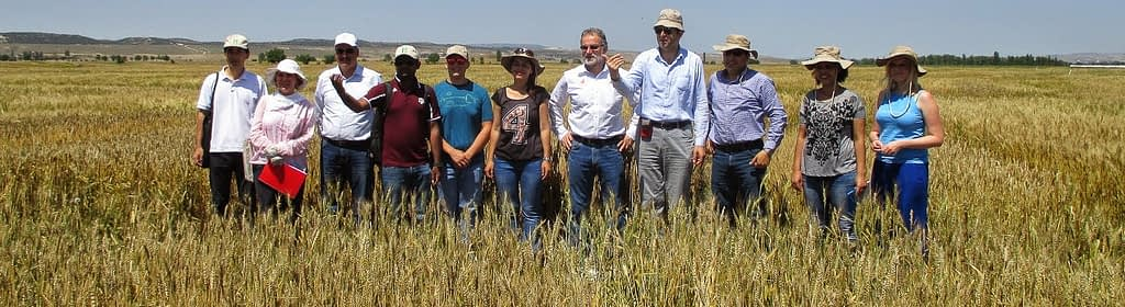 Hans Braun (seventh from left) visits wheat trials in Eskişehir, Turkey in 2014. (Photo: CIMMYT)