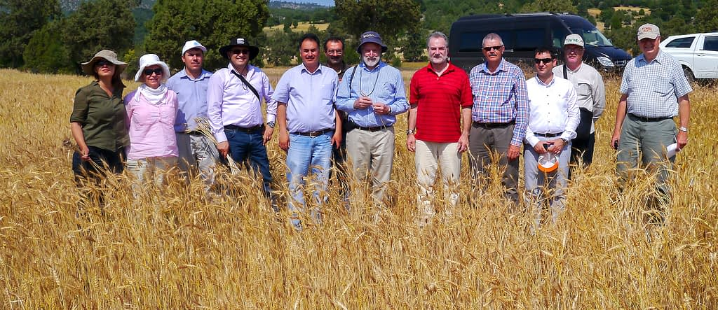 Former Director General of CIMMYT, Thomas Lumpkin (center), Hans Braun (next right) and Turkish research partners on a field day at a wheat landraces trial in Turkey. (Photo: CIMMYT)