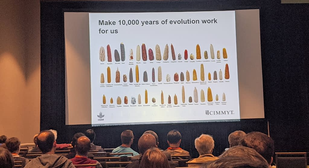 Sarah Hearne presents on the smart use of germplasm banks to accelerate the development of better wheat and maize varieties. (Photo: Francisco Gomez)