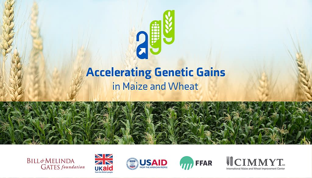 Accelerating Genetic Gains in Maize and Wheat (AGG)
