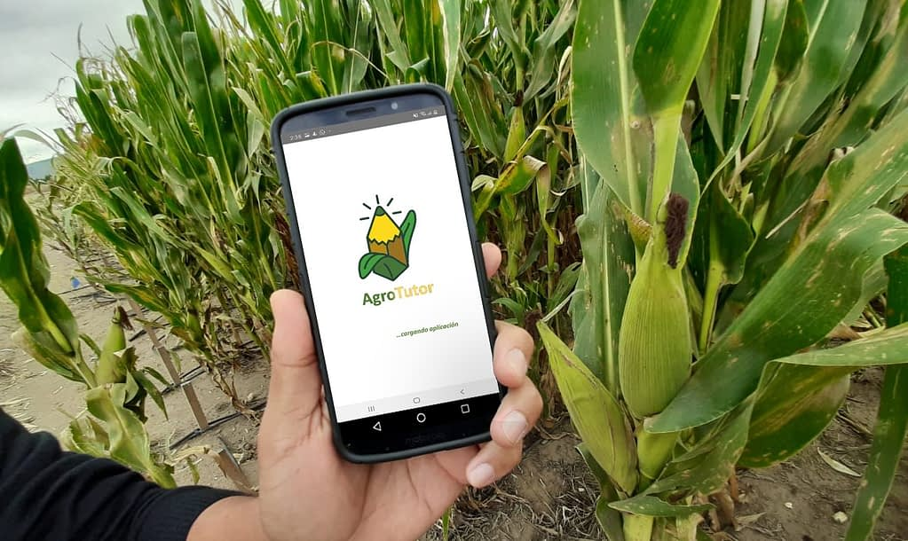 A researcher demonstrates the use of the AgroTutor app on a mobile phone in Mexico. (Photo: Francisco Alarcón/CIMMYT)