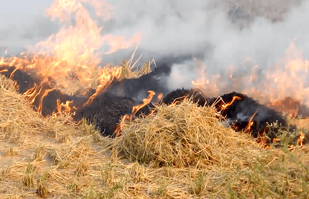 Air pollution related to crop residue burning imposes enormous public health and economic burdens in northwestern India. (Photo: CIMMYT)