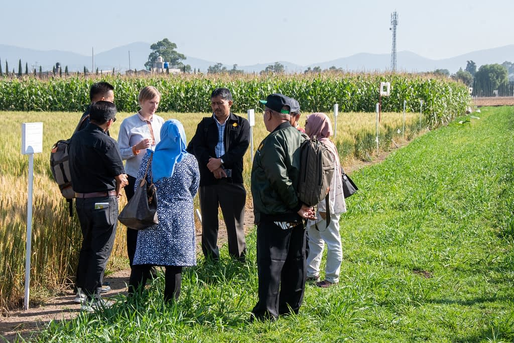 Indonesian researchers did a field visit to learn about sustainable intensification and climate change adaptation. (Photo: Alfonso Cortés/CIMMYT)