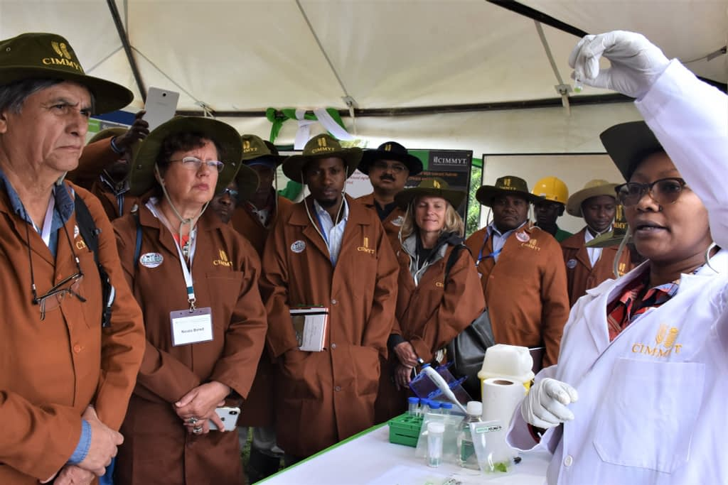 CIMMYT board members, staff, partners and farmers listen to a researcher at the MLN Screening Facility in Naivasha, Kenya. (Photo: Joshua Masinde/CIMMYT)