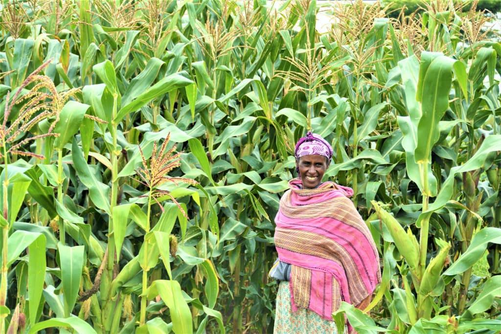 "A maize farmer in southern Ethiopia. (Photo: <a href=""https://flic.kr/p/2hp5uoS"">S. Samuel/CCAFS</a>)"