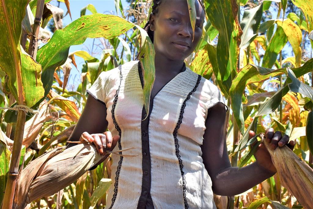 Jackline Wanja in one of the demo plots of the variety she liked. (Photo: Joshua Masinde/CIMMYT)