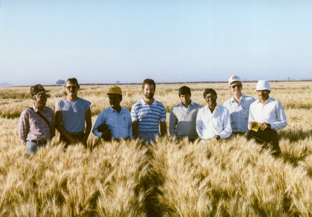 Hans Braun (center), Sanjaya Rajaram (third from right), Ravi Singh (first from right) and other colleagues stand for a photograph during a field day at CIMMYT's experimental station in Ciudad Obregón, Sonora, Mexico. (Photo: CIMMYT)