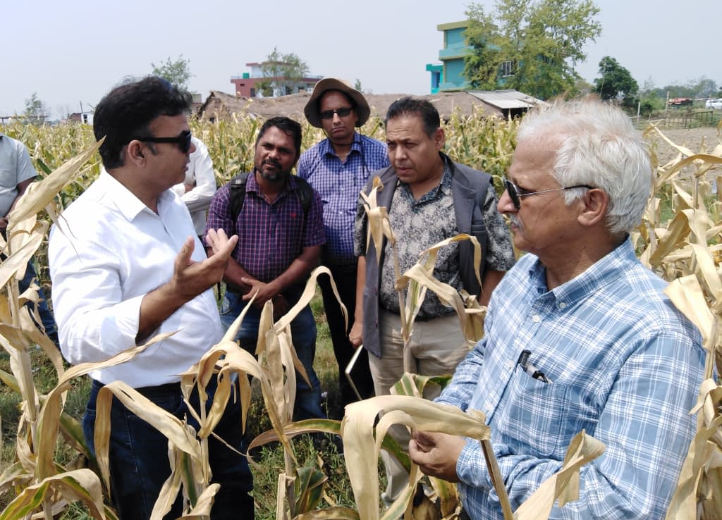 Scientists from CIMMYT and Nepal's National Maize Research Program (NMRP) talk to Lumbini Seeds staff at their hybrid seed production plot in Bairawah, Nepal. (Photo: Lumbini Seeds)