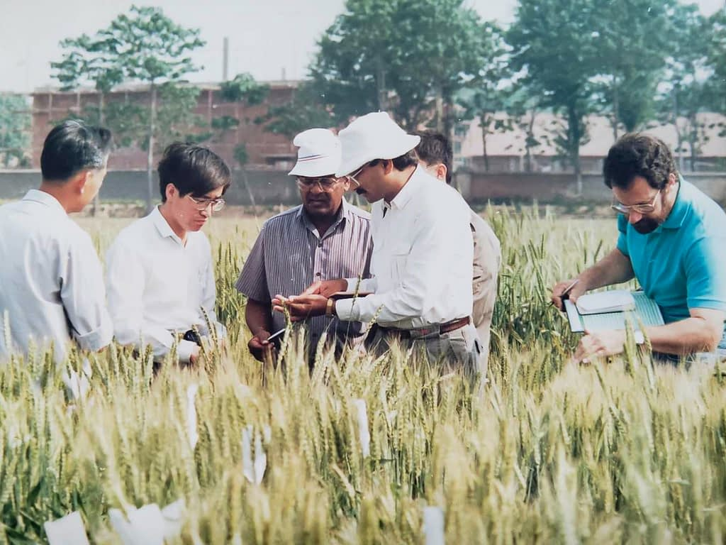 Left to right: Zhonghu He, Sanjaya Rajaram, Ravi Singh and Hans Braun during a field trip in Anyang, South Korea, in 1990. (Photo: CIMMYT)