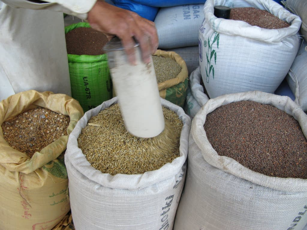 Agricultural seed on sale by a vendor near Islamabad, Pakistan. For improved crop varieties to reach farmers, they usually must first reach local vendors like these, who form an essential link in the chain between researchers, seed producers and farmers. (Photo: M. DeFreese/CIMMYT)