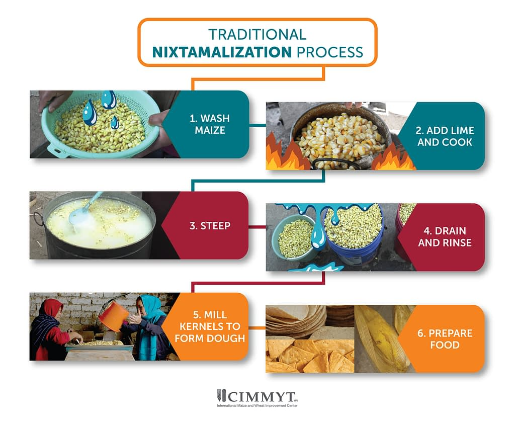 Key steps of the traditional nixtamalization process. (Graphic: Nancy Valtierra/CIMMYT)