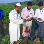 Participants of the Fighting Back Against Fall Armyworm trainings learning to collect field data through the Fall Armyworm Monitor web app in a farmer's field in Chauadanga, Bangladesh. (Photo: Uttam Kumar/CIMMYT)