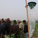 A pheromone trap is installed next to a maize field in Nepal. (Photo: Bandana Pradhan/CIMMYT)