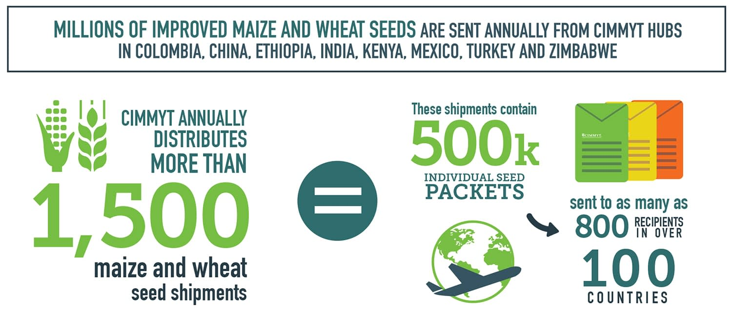 CIMMYT is one of the largest public sector germplasm providers worldwide.