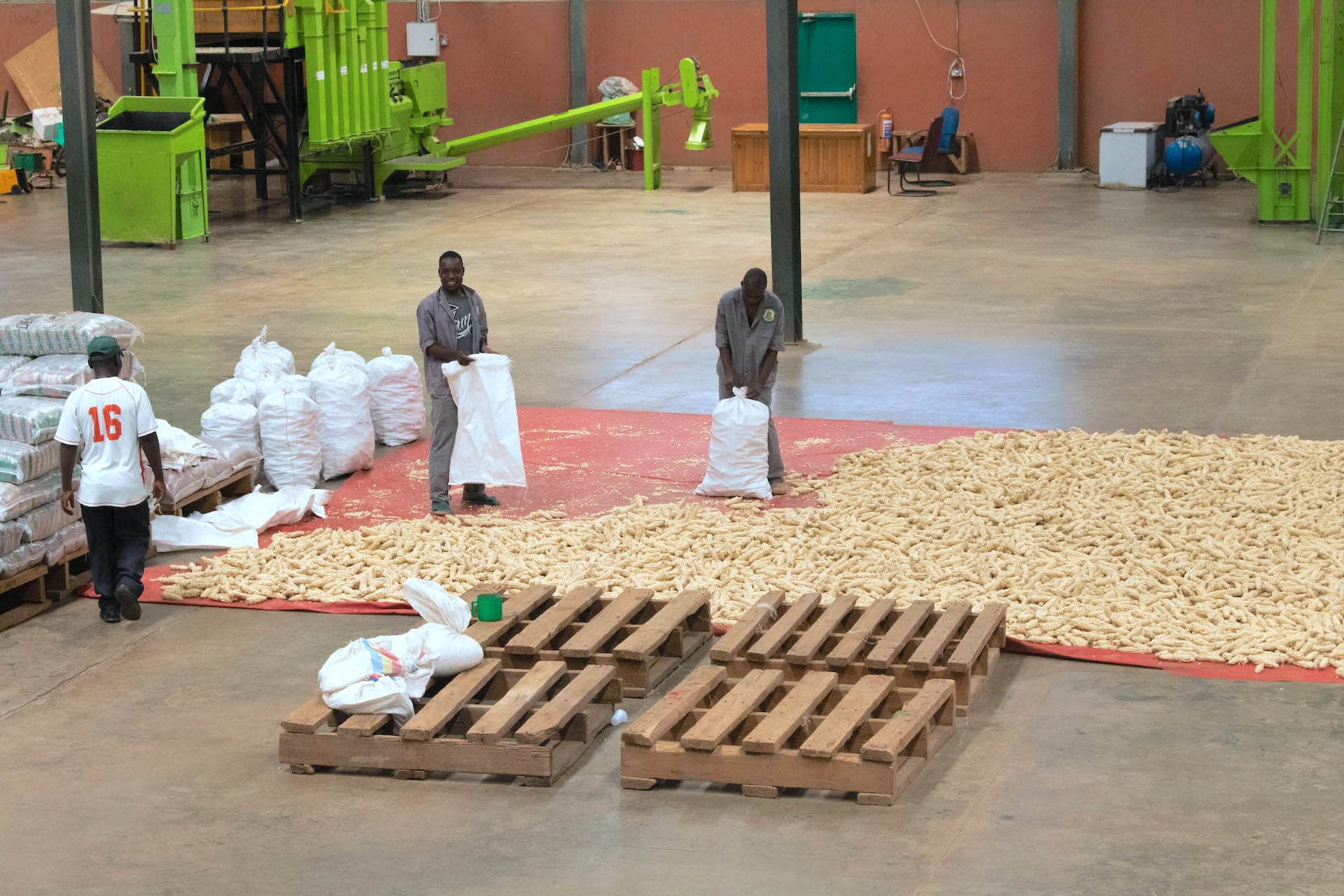 Staff members bag maize at the Demeter Seeds warehouse. (Photo: Emma Orchardson/CIMMYT)