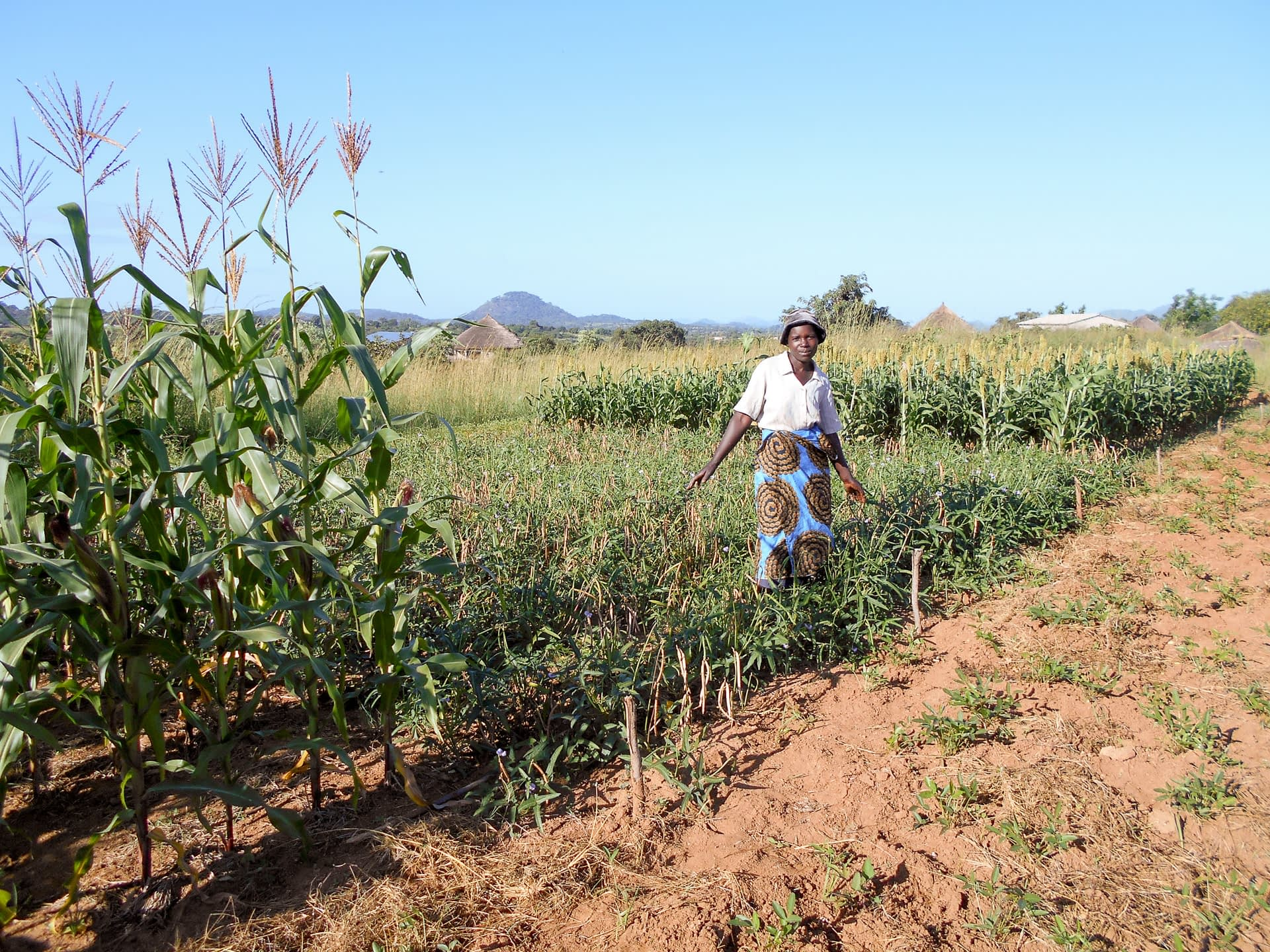 Kiyasi Gwalale stands on her baby trial plot.