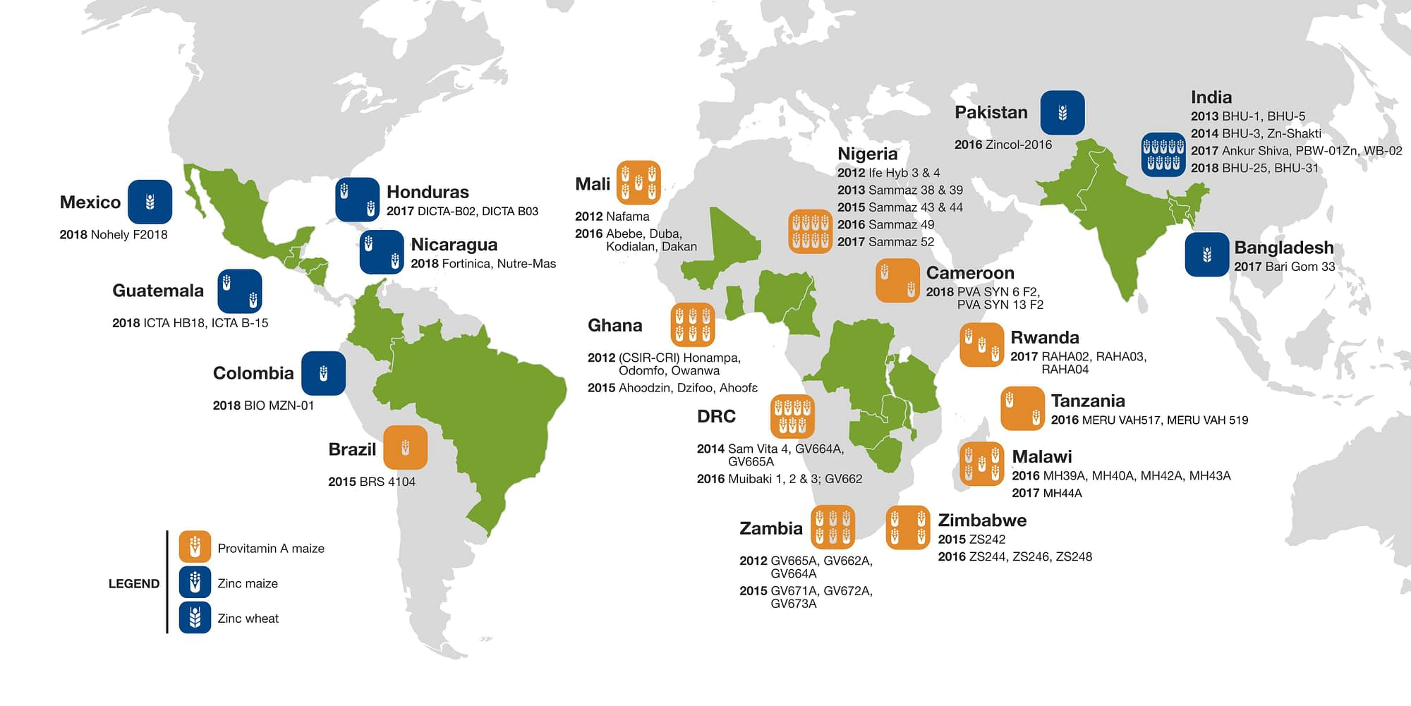 Farmer and consumer interest has grown for some 60 maize and wheat varieties whose grain features enhanced levels of the essential micronutrients zinc and provitamin A, developed and promoted through collaborations of CIMMYT, HarvestPlus, and partners in 19 countries (Map: Sam Storr/CIMMYT).