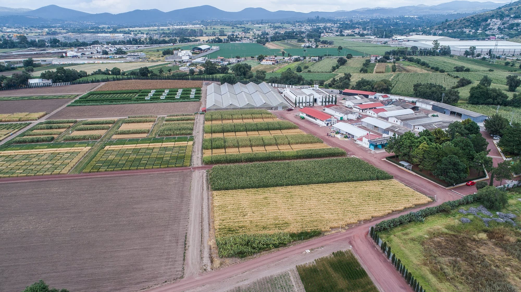 Maize and wheat fields at CIMMYT's El Batán experimental station.