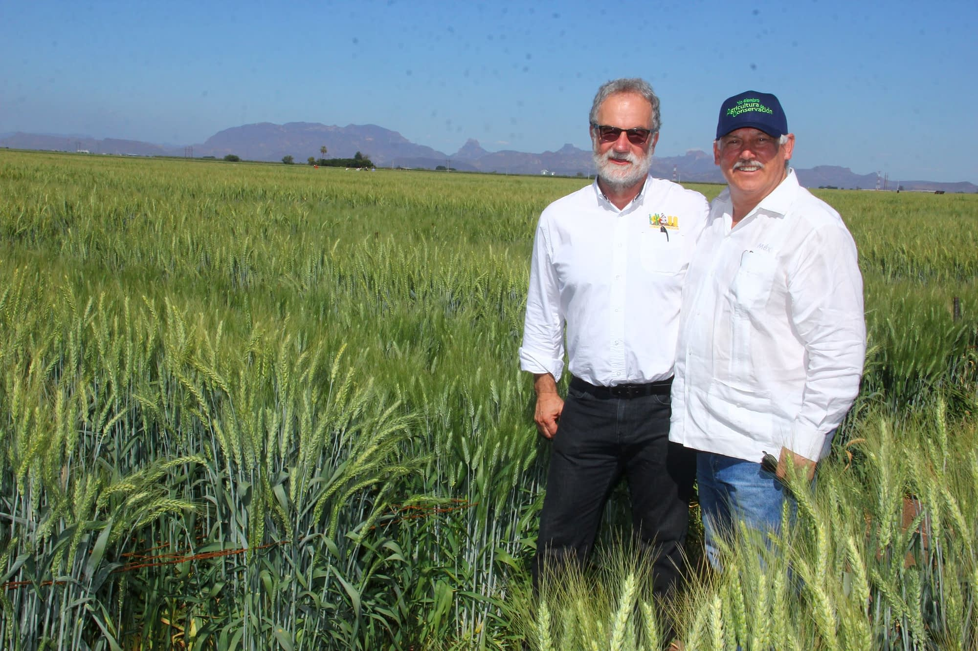 Secretary Villalobos (right) and Hans Braun, Program Director for CIMMYT's Global Wheat Program, stand for a photograph in a wheat field at the experimental station in Obregón. (Photo: Ernesto Blancarte)