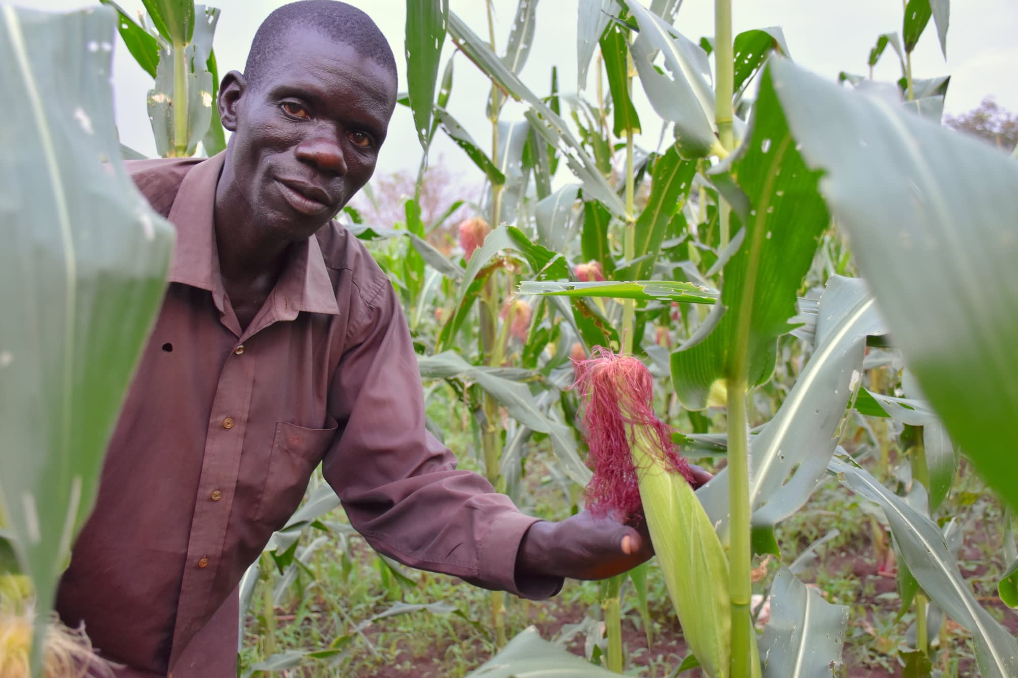 Geoffrey Ochieng', a smallholder farmer from northern Uganda. He plants the UH5051 variety on his land. (Photo: Joshua Masinde/CIMMYT)