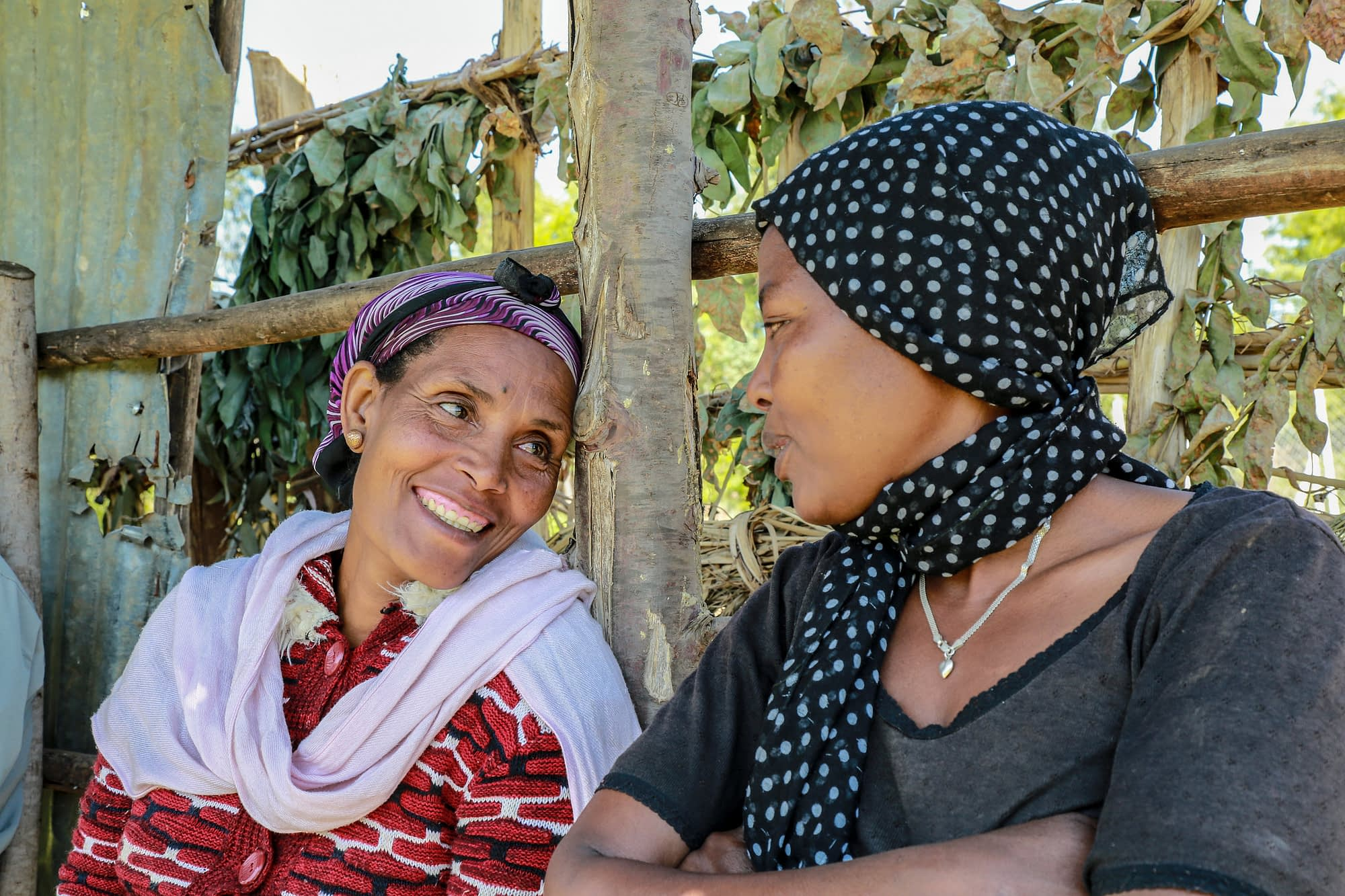 "Amarech Desta (left) is the chairwoman of Tembo Awtena, a womens' seed producer association in the Angacha district of Ethiopia's Southern Nations, Nationalities, and Peoples' Region (SNNP). As part of the Wheat Seed Scaling project, the group received early-generation seed and a seed thresher from CIMMYT. ""In 2016 we sold more than $7,400 worth of seed,"" Desta said. ""Our success attracted 30 additional women farmers in 2017, bringing the total membership to 133."" (Photo: Apollo Habtamu/CIMMYT)"