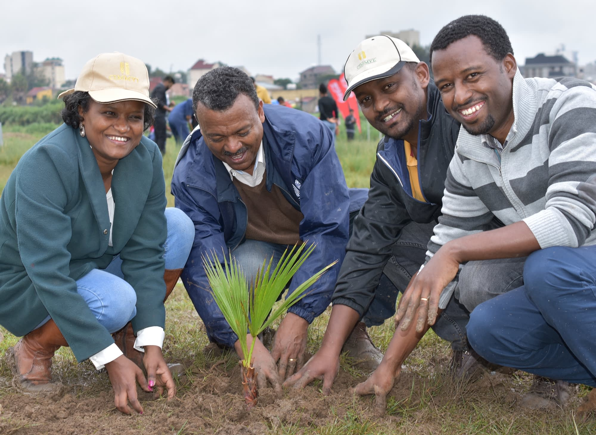 Staff members of CIMMYT and other CGIAR centers in Ethiopia participated in the country's nationwide campaign that resulted in the planting of more than 350 million trees in one single day. (Photo: CIMMYT)