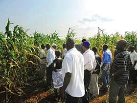 Seed production workshop participants visited a hybrid seed field at East African Seeds in Uganda.