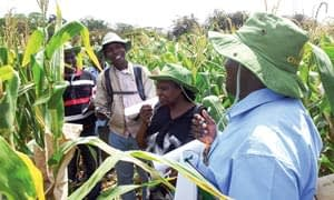 Some of the CIMMYT partners who participated in a field day showcase fertilizer friendly maize in Kiboko, Kenya. Photo: Biswanath Das/CIMMYT