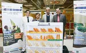 Imtiaz Muhammad, CIMMYT Country Representative, Pakistan, at the AIP-maize component display.