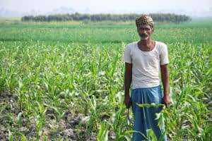 A new study finds sustainable agriculture can cut emissions in India. Photo: M. DeFreese/CIMMYT.