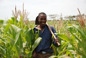 Drought Tolerant Maize for Africa (DTMA) project monitoring and evaluation takes place in Tanzania. (Photo: Florence Sipalla/CIMMYT)
