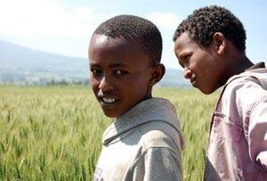 wheat-africa-photo2