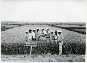 Norman Borlaug (fourth right) in the field showing a plot of Sonora-64, one of the semi-dwarf, high-yield, disease-resistant varieties that was key to the Green Revolution, to a group of young international trainees, at what is now CIMMYT's CENEB station (Campo Experimental Norman E. Borlaug, or The Norman E. Borlaug Experiment Station), near Ciudad Obregón, Sonora, northern Mexico. Photo: CIMMYT.