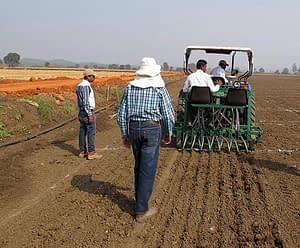 Researchers sow wheat trials. Photo: Arun Joshi