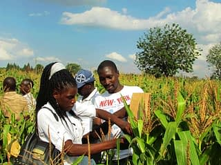 Zimbabwe-technicians