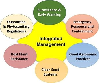 Prevention and control of diseases and pests requires an integral strategy which mobilizes synergies of multiple institutions. (Graphic: B.M. Prasanna/CIMMYT)
