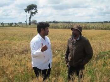 wheat farmers in kenya
