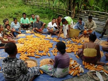 Timor-Leste-CBSP-Maize-Photo