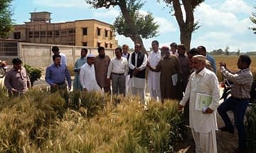 Seed quality management training participants visit wheat trials at Pakistan's Agricultural Research Institute (ARI), Tandojam, Sindh. Photo: Tando Jam/ARI