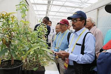 plant-specimens