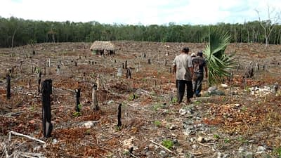 Farmers walk through a field that has been cleared by slash and burn agriculture in the Yucatan peninsula. Photo: Maria Alvarado/ CIMMYT