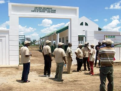 IIAM's site for confined field trials at Chokwe.