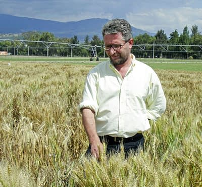 Wheat physiologist Matthew Reynolds[