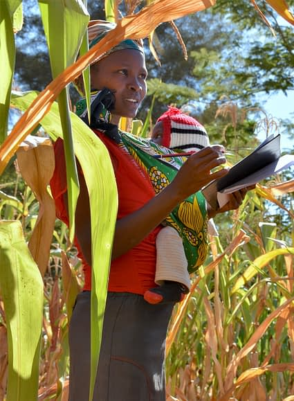 A young farmer holding a baby participates in a varietal assessment exercise on a maize trial plot in Machakos County, Kenya. (Photo: Joshua Masinde/CIMMYT)