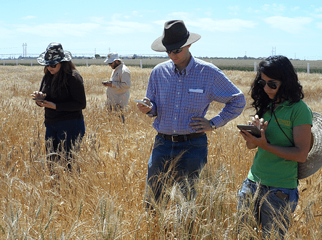 Trainees work with KDSmart phenotyping technology, one of the subjects taught in the new SeeD distance learning modules. Photo: G. Salinas/CIMMYT