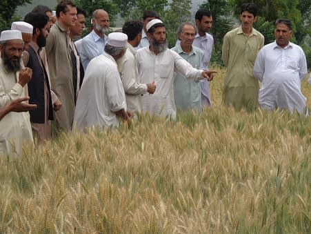 Want to learn more about CIMMYT's activities in Pakistan? Check out our news feed here. Photo: CIMMYT