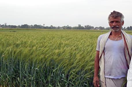Biohappiness: A happy farmer grows ZincShakti wheat on his farm in Uttar Pradesh, India. Photos: Nirmal Seeds, India
