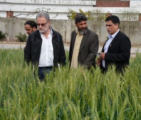 Hans-Joachim Braun (left, white shirt), director of the global wheat program at CIMMYT, Maqsood Qamar (center), wheat breeder at Pakistan's National Agricultural Research Center, Islamabad, and Muhammad Imtiaz (right), CIMMYT wheat improvement specialist and Pakistan country representative, discuss seed production of Zincol. Photo: Kashif Syed/CIMMYT.