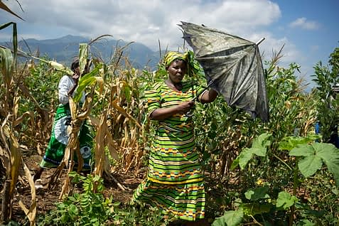 Farmers inspect a demonstration plot during a conservation agriculture field day near Songani in Zomba district, Malawi. Photo: P. Lowe/CIMMYT